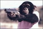alpha chimp
